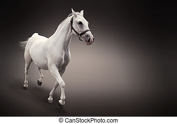 White horse in motion isolated