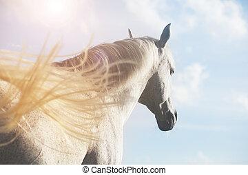 white horse in sunlight