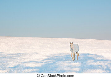 white horse in the winter
