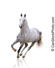 white horse on white isolated