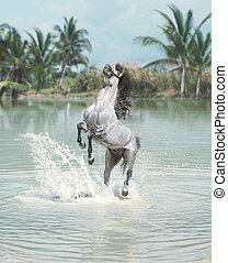 White horse jumping in the pond