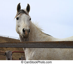 White horse looking alert