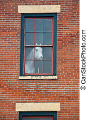 White horse mannequin in the window