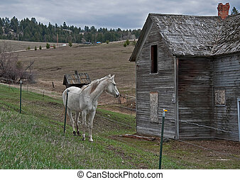 White Horse Near Old Homestead - This country stock image is...