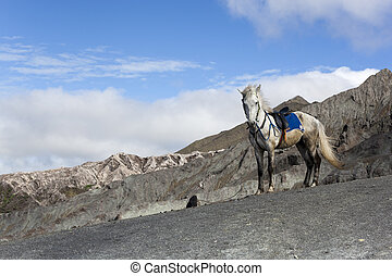 white horse near volcano mountain