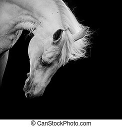 white horse on a black