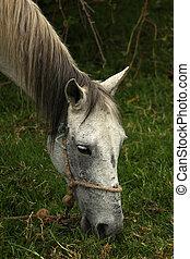 White Horse on a Farm