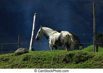 White Horse on a Hill