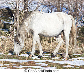 white horse on nature in winter