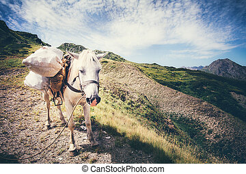 White Horse pack Animal with mountains and clouds landscape ...