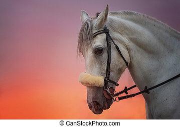 White Horse portrait at sunset