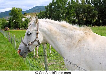 white horse portrait outdoor meadow grassland