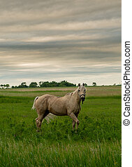 White Horse Poses in Country Field