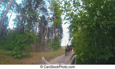 White horse riding at the pathway in forest