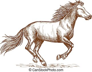 White horse running gallop sketch portrait