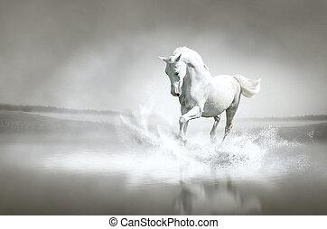 White horse running through water