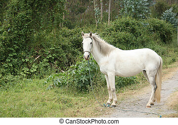 White Horse Standing on a Road