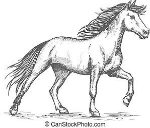 White horse stomping hoof sketch portrait - Slender white...