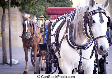 White horse used to pull a tourist cart