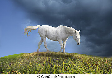 White horse walking in prairie.