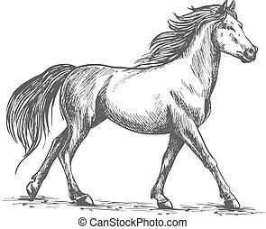 White horse walks gracefully - Proud white horse walks...