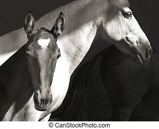 white horse with foal