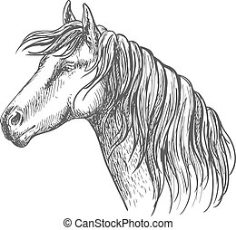White horse with mane along neck. Mustang stallion sketch portrait with kind eyes and meditative glance