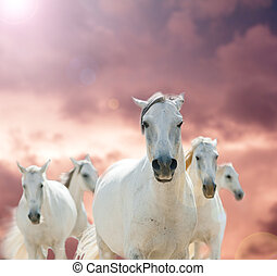white horses against the cloudy skies