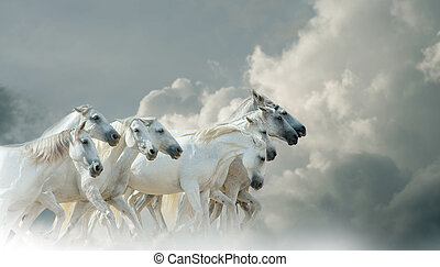 White horses in skies - White horses running with skies on...