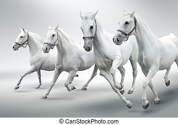 White horses  - Photo of four white hrses in motion