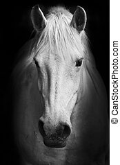 White horse\'s portrait - This black and white artistic...