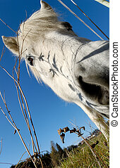 White Horse\\\'s Snout - A wide-angle shot of a horse\\\'s...
