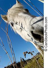 White Horse\\\'s Snout