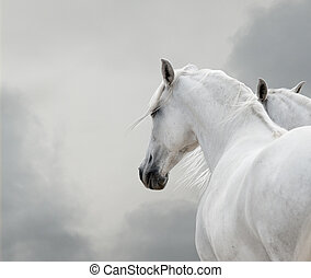 white horses in storm