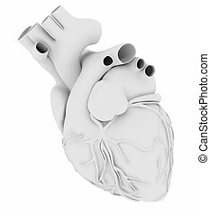 White human heart isolated on white background, 3d ...