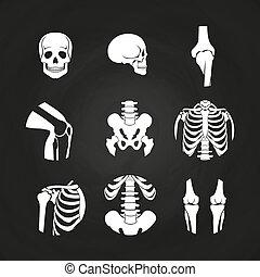 White human skull and bones