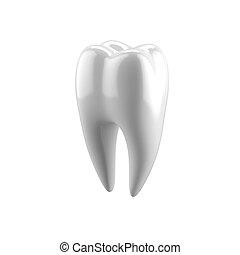 White human tooth