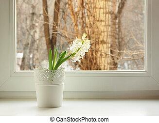 white hyacinth on window sill