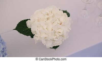 White hydrangea on a table