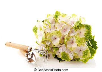 White Hydrangea with gardening tools