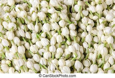 white jasmine flower background