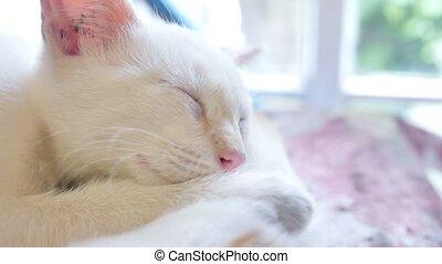 white kitten cat sleeping on a red kitten friendship funny pets slow motion video
