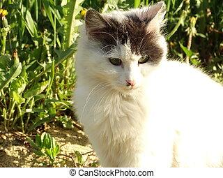 White Kitten in a Green Garden