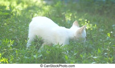 white kitten jumping in the grass slow motion video