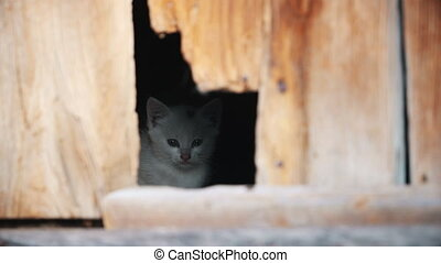 white kitten looks at the world through a crack in the door, animals