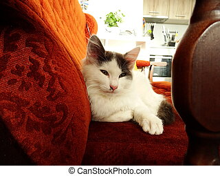 White Kitten on a Brown Couch