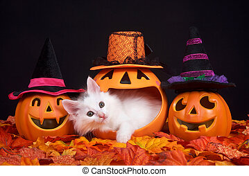 White kitten peaking out of jack o lantern