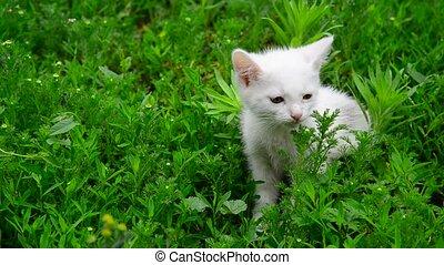 White kitten shivering from cold in grass - White kitten ...