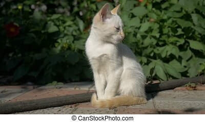 white kitten sitting on the grass blinks slow motion video