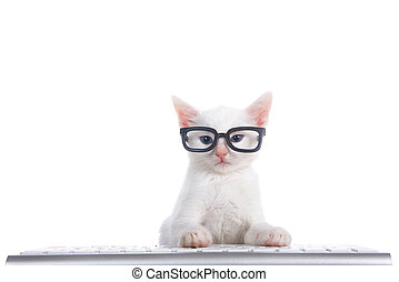 White kitten wearing glasses at computer keyboard isolated